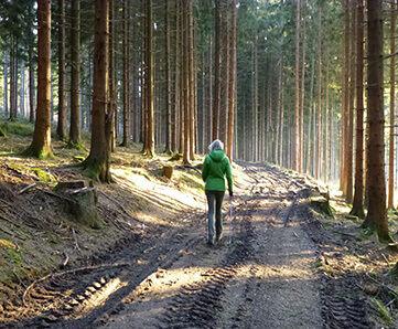 Прогулка в лесу и скандинавская ходьба